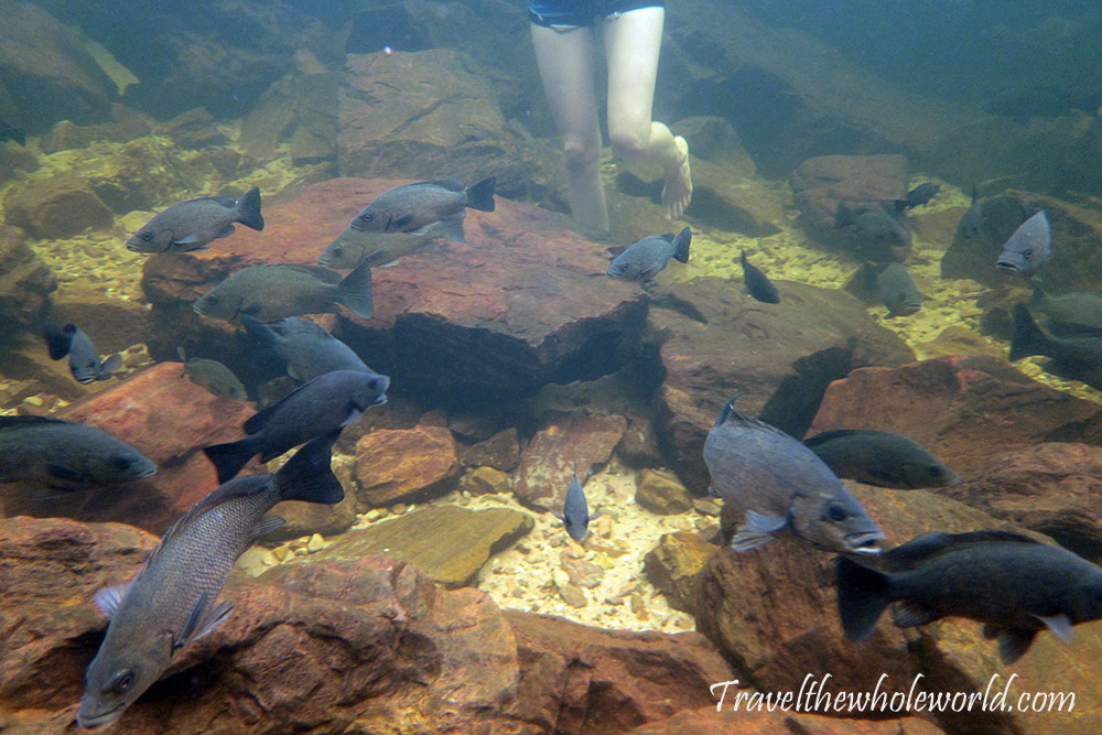 Australia Litchfield Swimming Fish