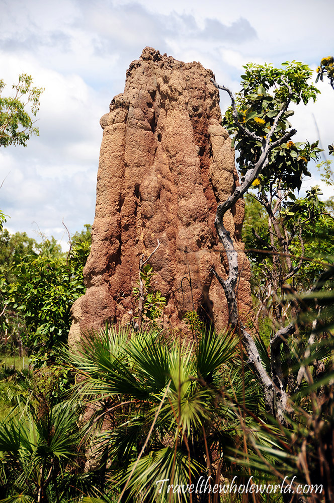 Australia Litchfield Termite Mound