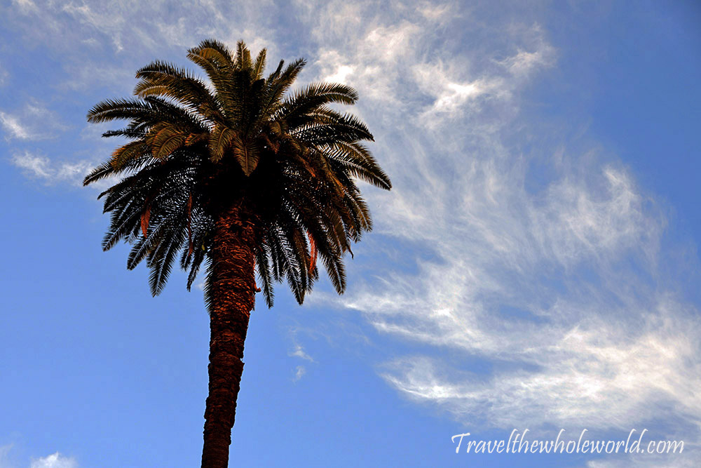 Argentina Buenos Aires Palm Sky