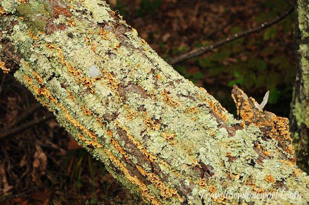 Virginia Appalachian Trail McAfee Knob Fallen Tree Bark