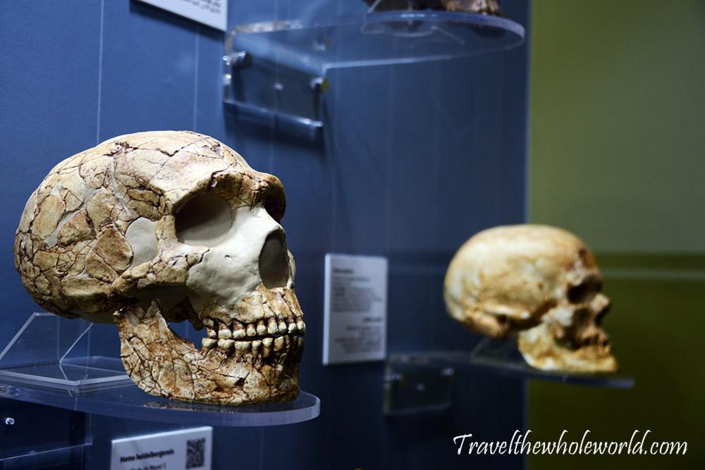 Algeria Algiers Museum of Antiquities Human Skulls